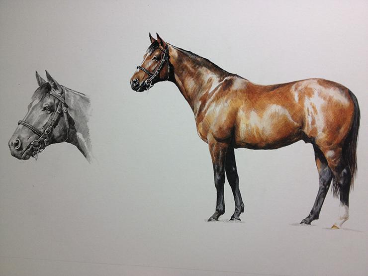 Tony O Connor Equine Artist 2015